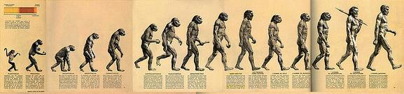 fragment of original march of progress illustartion shows that we evolved from monkeys