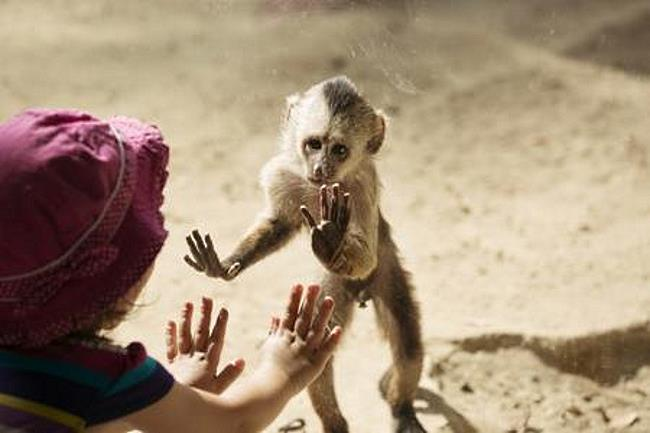 human baby girl playing with a monkey
