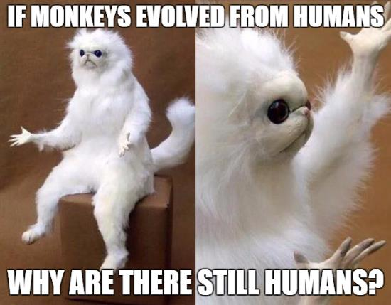 if monkeys evolved from humans, why are there still humans