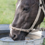 a horse drinking water which is essential to life