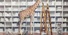 Why evolution isn't perfect and giraffes don't evolve even longer necks