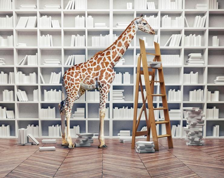 a giraffe in a library