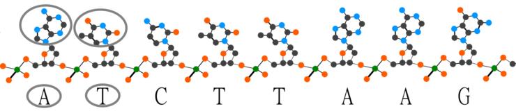 single strand of DNA
